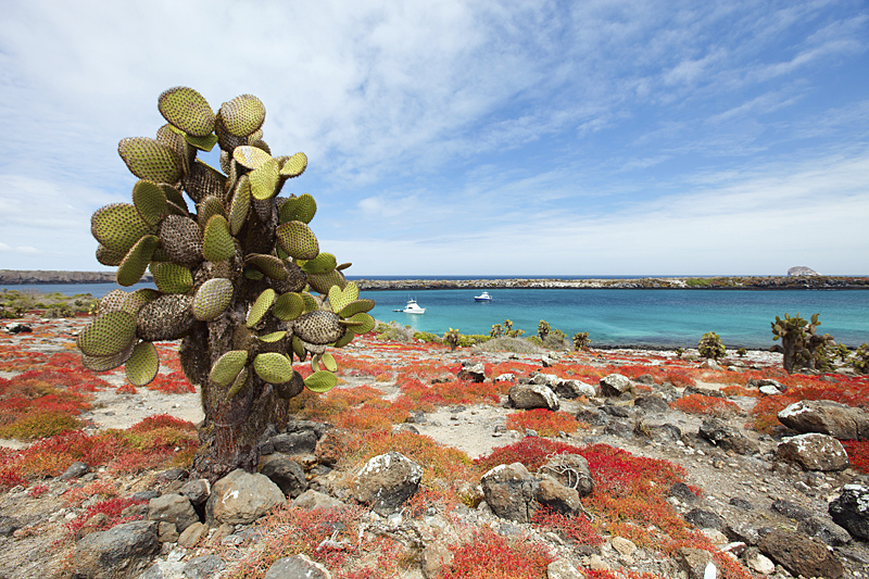 Volcanic rock of the Galapagos