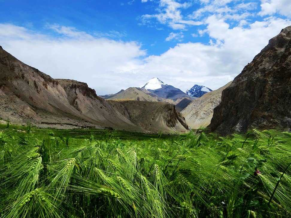 Verdant valley below Stok Kangri