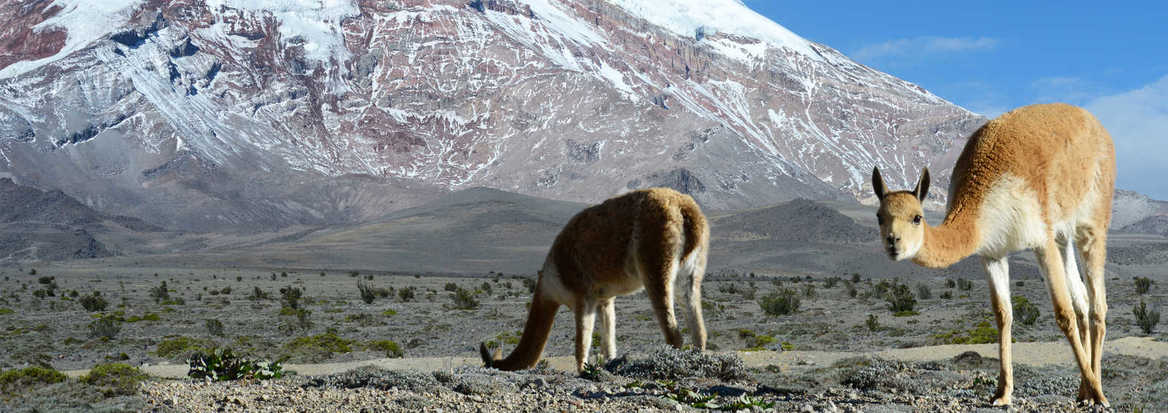 wildlife in the andes