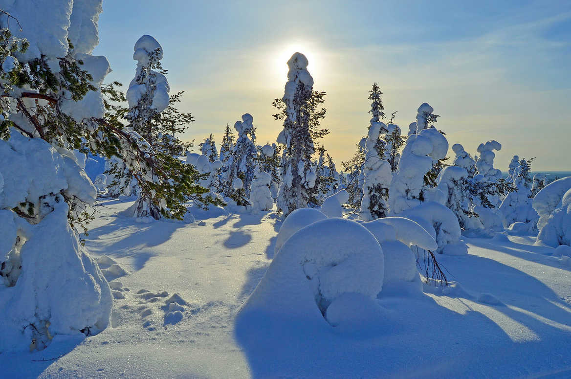 The Finnish Wilderness