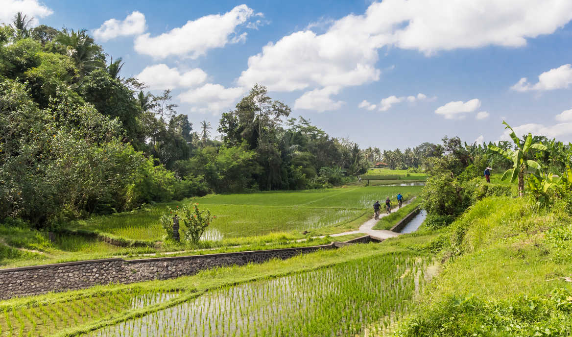 Cycle through UNESCO rice terraces