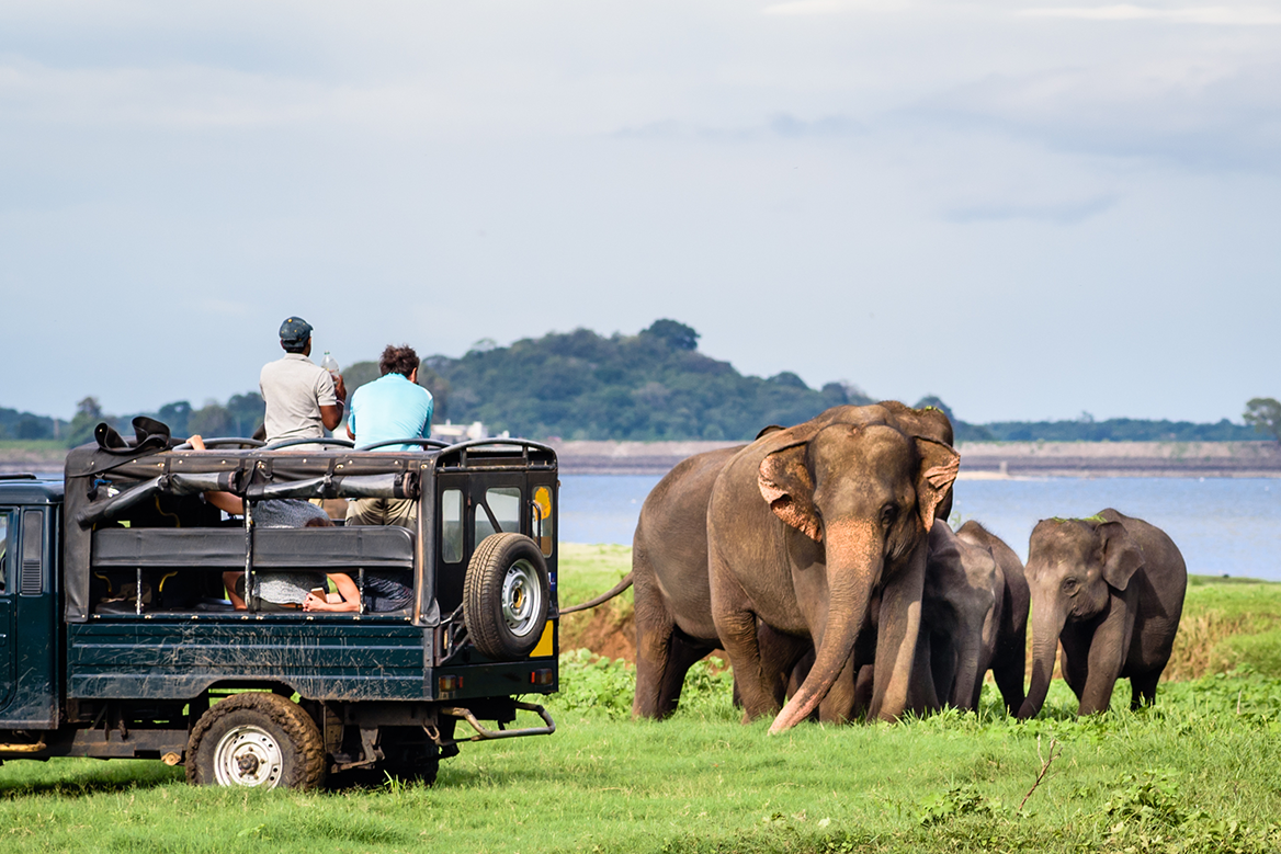 Minneriya Elephant watching in Sri Lanka