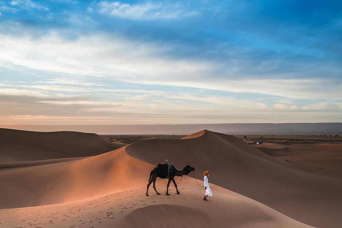 Camel on Moroccan Dunes