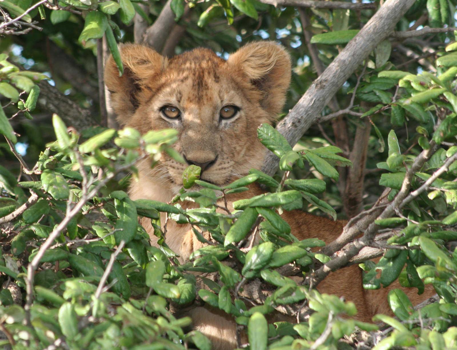Tanzania Trips 496ad512e