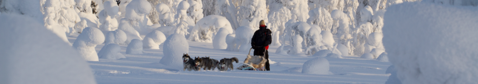 Dogsledding in Finland