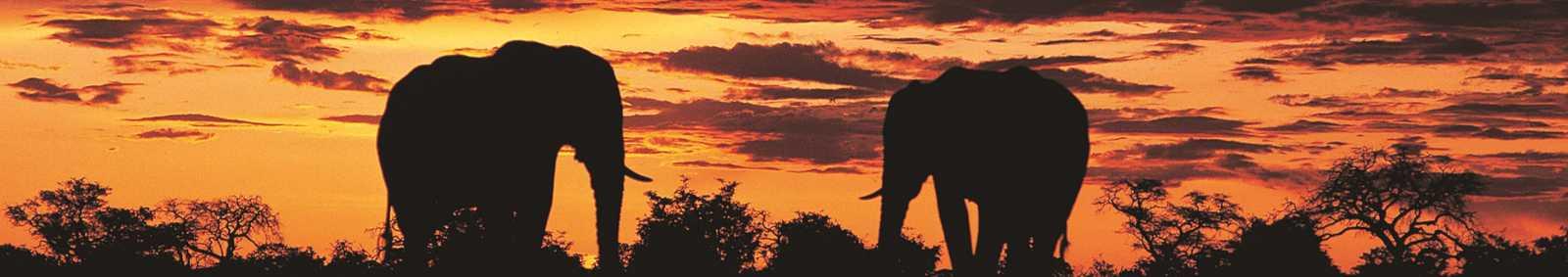 Elephants Sivuti, Botswana