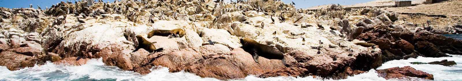 Ballestas Islands, near Paracas