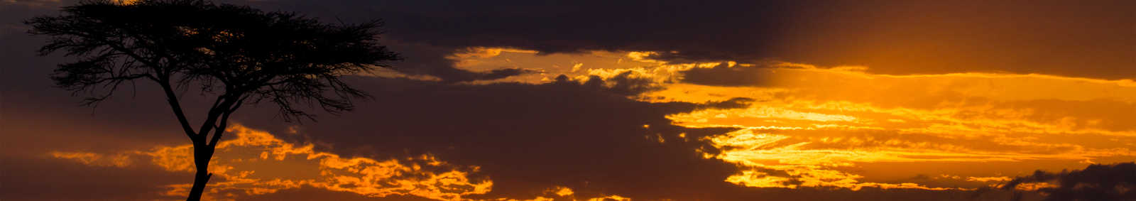 Wildbeast sunset, Masai Mara - Copyright Paul Goldstein