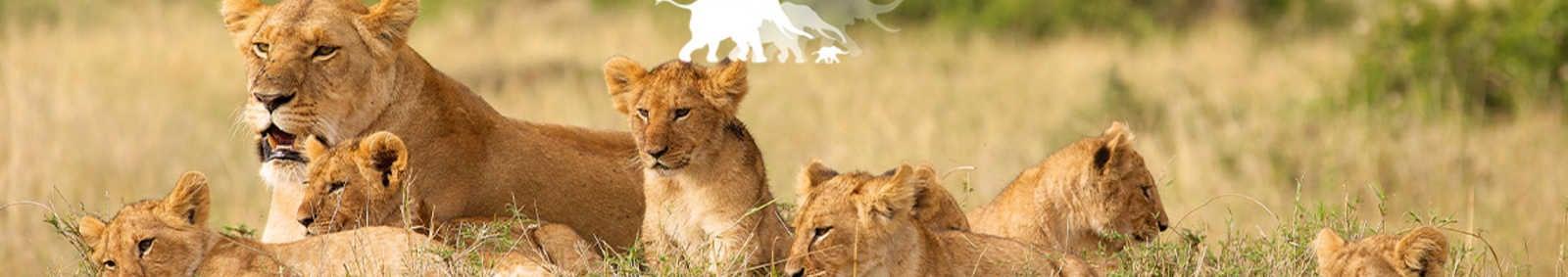 AWF Kenya Safari