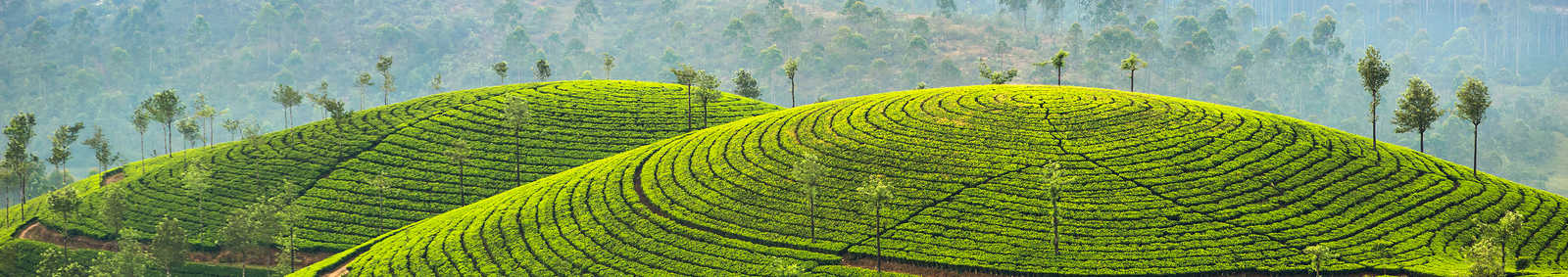 Sri Lanka Rice Paddies