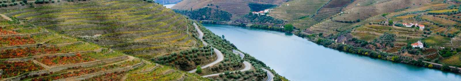 Terraced vineyards in autumn in the Douro Valley