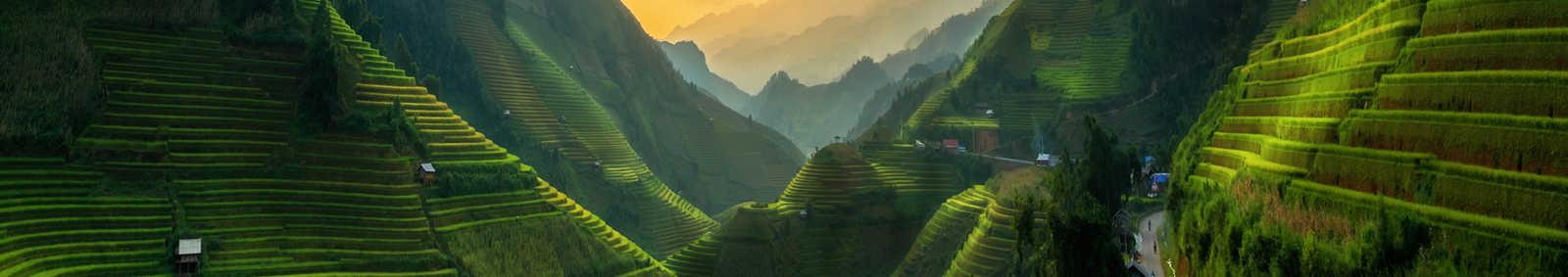 vietnam fields