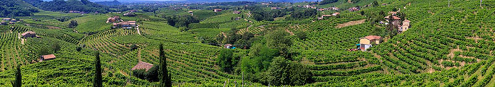 Prosecco Hills