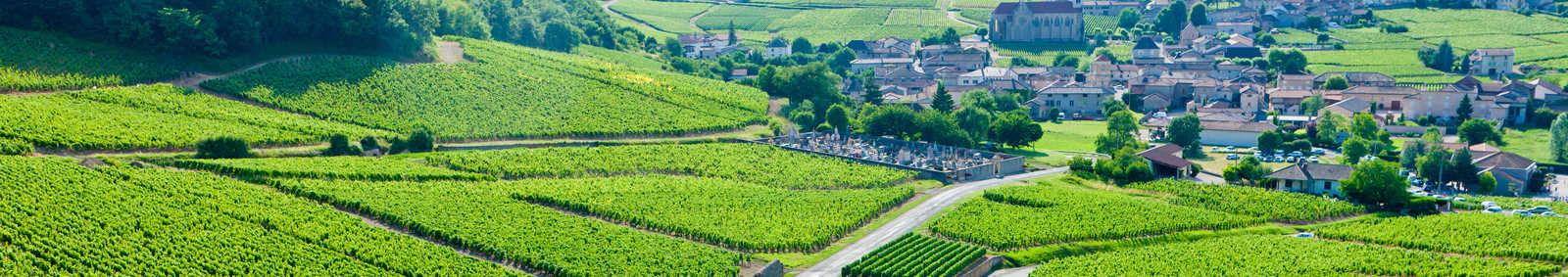 Vineyards in Burgundy, France