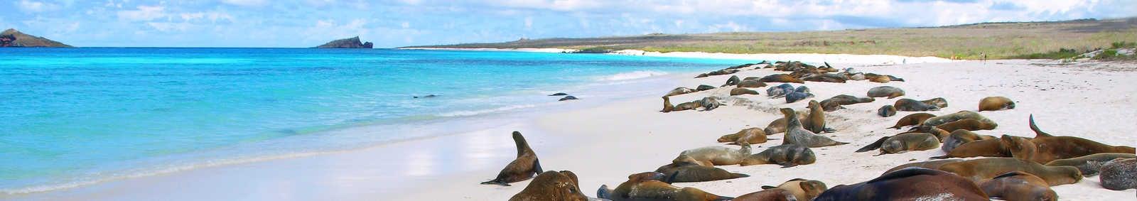 sea lions at gardner bay
