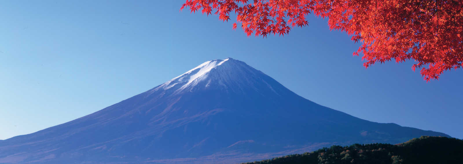 Japanese Maple and Mt Fuji