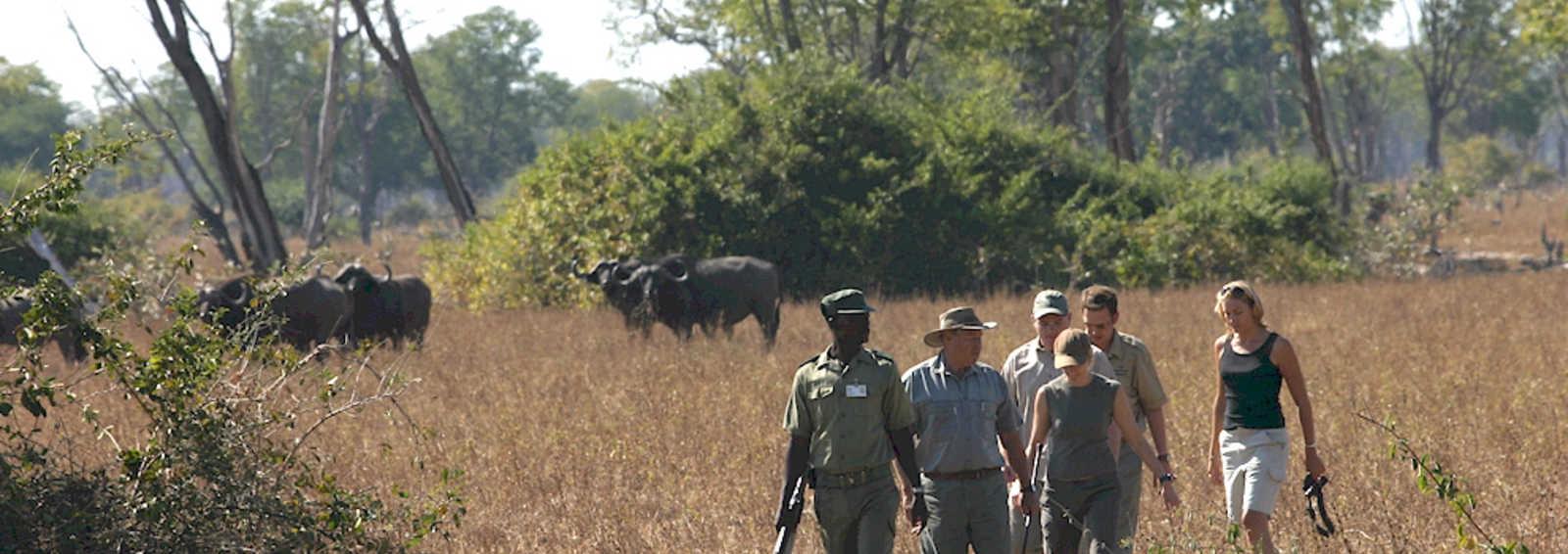 Walking Safari, South Luangwa, Zambia