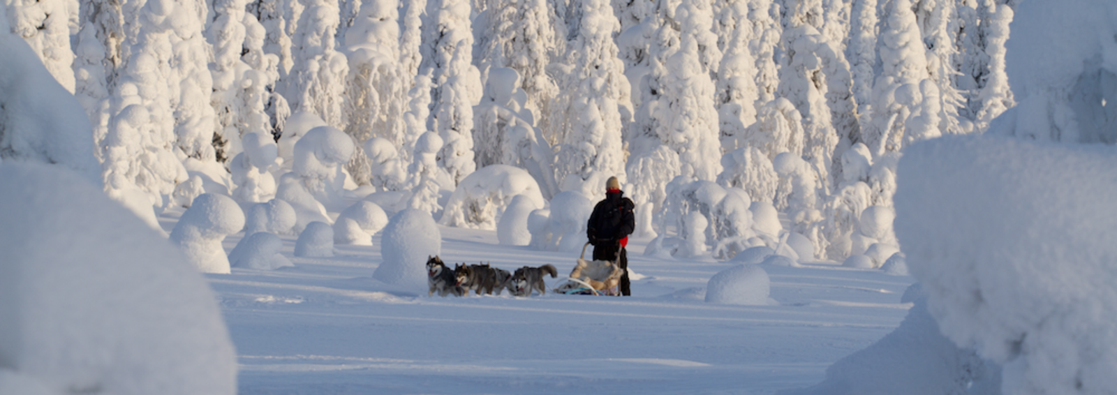 Dogsledding through snow-capped trees, Riisitunturi National Park, Finland (photo by Erkki Ollila)