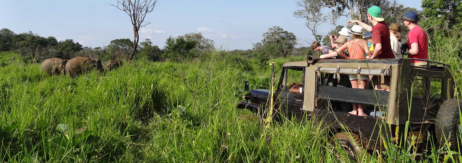 Elepant Sarari near Giritale