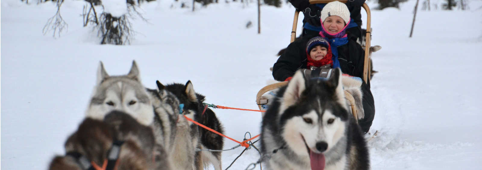 Family ride on a dogsled, Finland