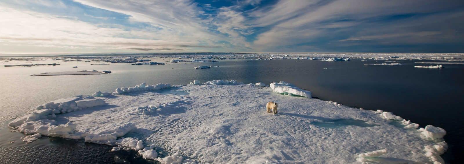 Polar bear on ice, Arctic