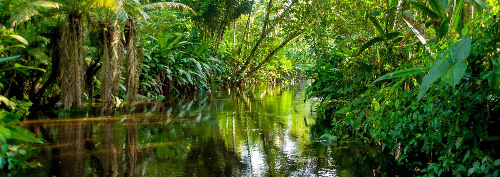 Amazon Jungle, Peru