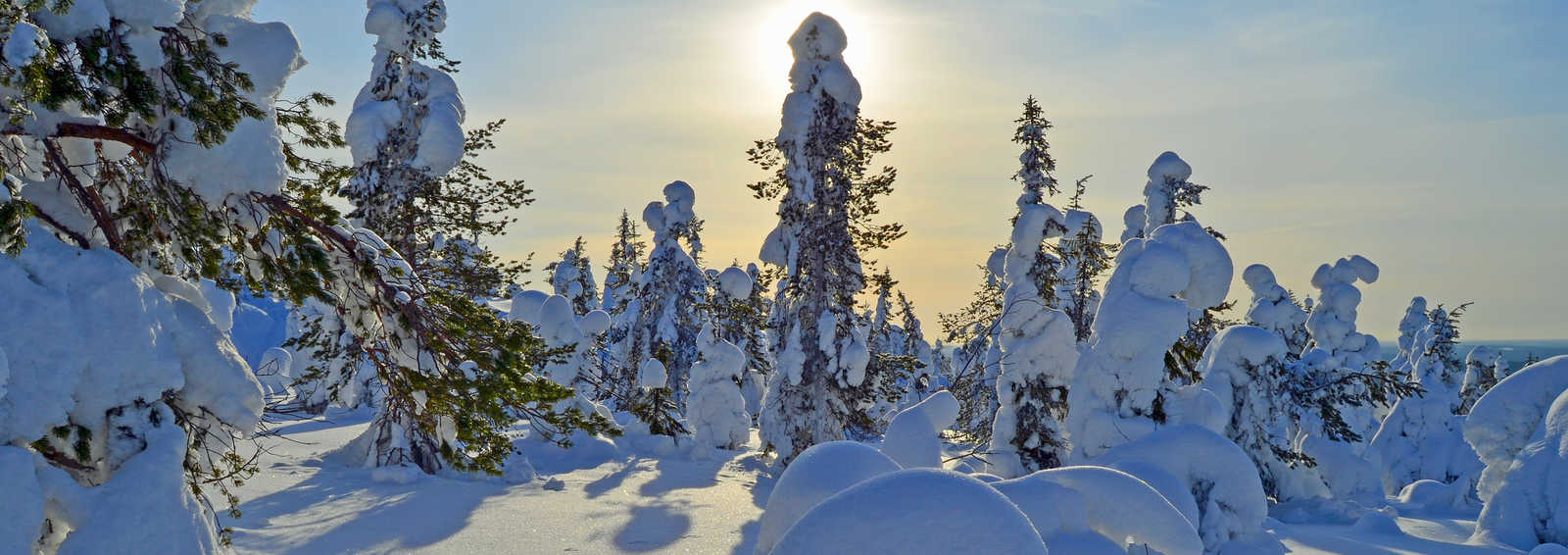 Cross country ski tracks on snowy forest on ski resort area in Lapland Finland.
