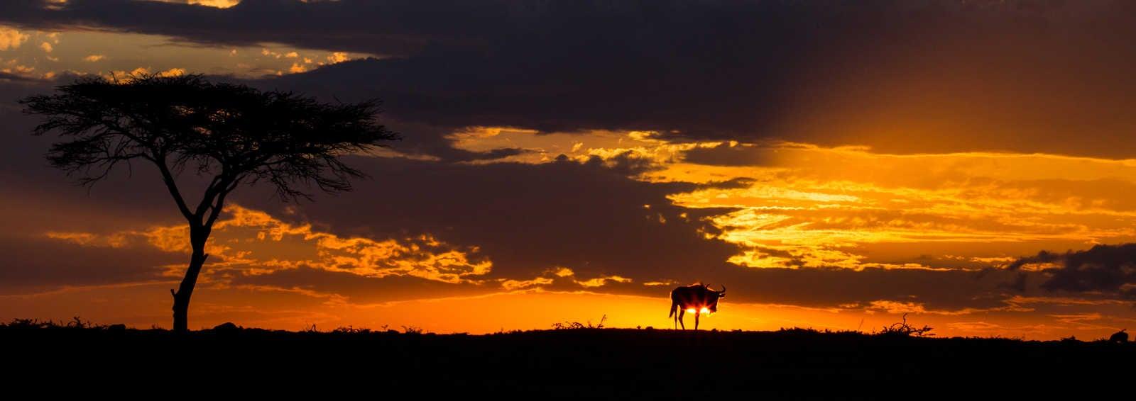 Wildbeest sunset, Masai Mara