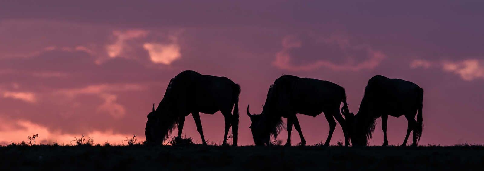 Tanzania wildebeest - Wildlife Exposed with Paul Goldstein