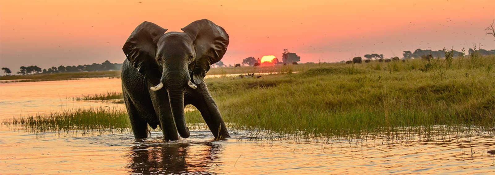 Elephant in Chobe Park, Botswana