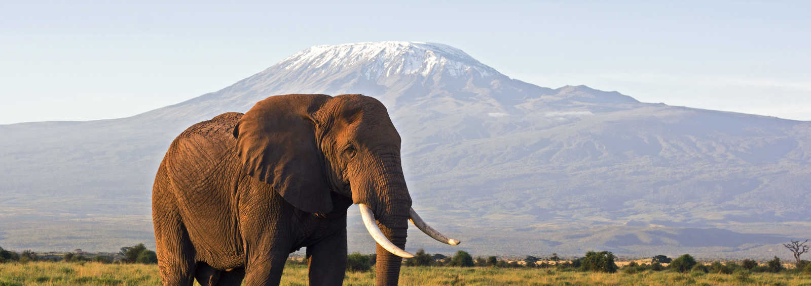 Elephant in front of Kilimanjaro, Tanzania