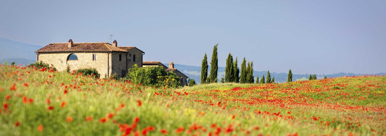 Poppy field in bloom, Tuscany, Italy