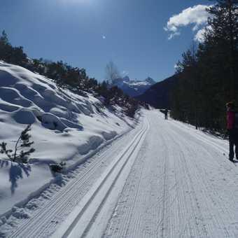 Towards Cortina