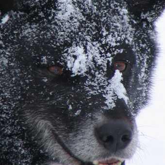 Pondus - Chief snow roller