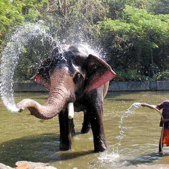 Meeting an elephant
