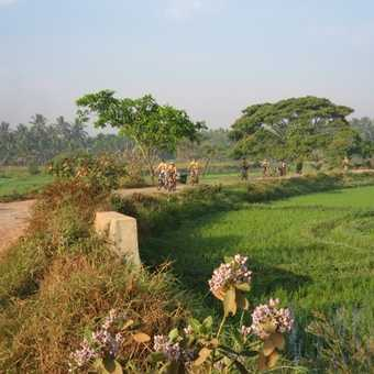Cycling through paddy fields