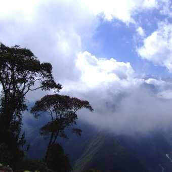 In the cloud forest