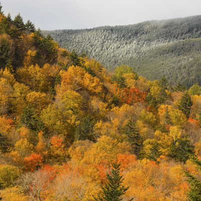Low clouds leave an icing of frost on high ridges in Crawford Notch of New Hampshire's White Mountains.