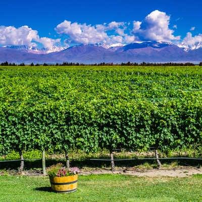 Argentina Wine Region