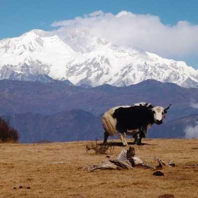 Kanchenjunga from Phoktay Dhara, India