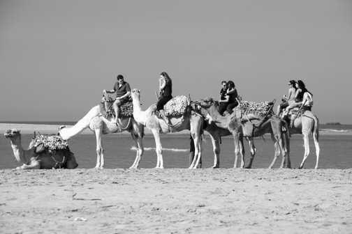 Camels on the beach, Essaouira