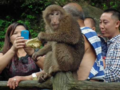 cheeky monkey Mt Emei