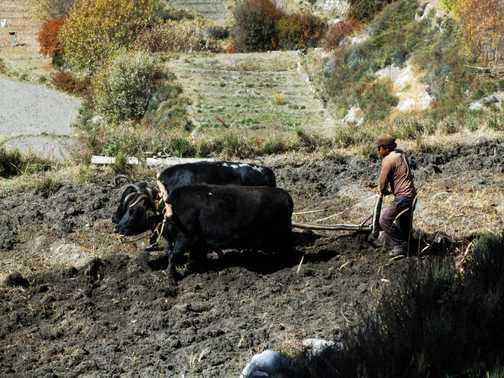 Traditional farming remains