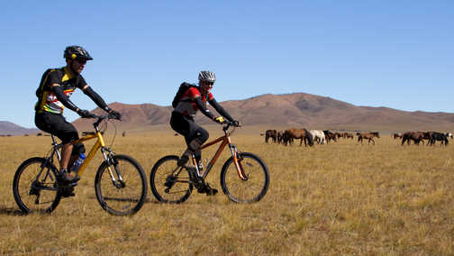 Cycling through herds of horses.