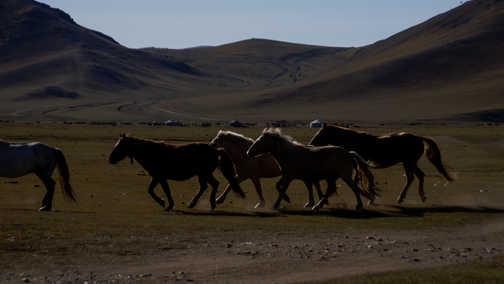 I'm not usually much of a fan of horses but the herds encountered were spectacular.