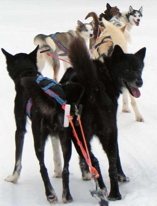 The A team - Zelda, Baileys, Grainne, Dingo, Pondus & Chanel