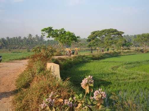 Cycling through paddy fields