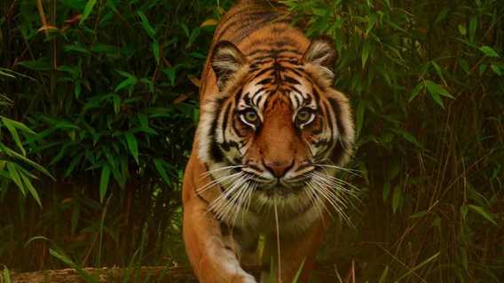 Responsible Tiger Safari in India