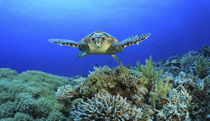 Coral Reef and Sea Turtle