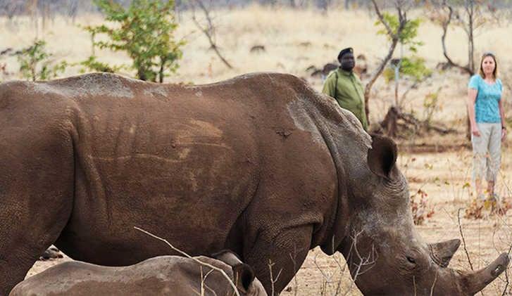 Rhino Safari in the Serengeti, Tanzania